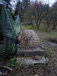 Experiment Živý domek ze stromů - javor babyka u schodů