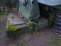 Experiment Živý domek ze stromů - stromky kolem základu