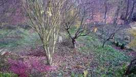 Zahrada v listopadu, listopad 2008, Brno Soběšice