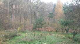 Pohled na sever k lesu, listopad 2008, Brno Soběšice
