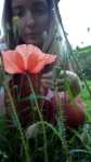 Mák vlčí, Papaver rhoeas, květ, srpen 2008, Brno Soběšice