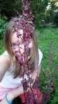 Berry a červená lebeda zahradní, Atriplex hortensis, po odkvětu, srpen 2008, Brno Soběšice