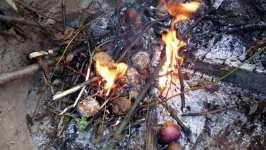 Monilozou napadená jablka v ohni, říjen 2008, Brno Soběšice