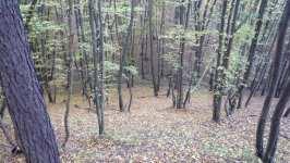 Přilehlý les, říjen 2008, Brno Soběšice