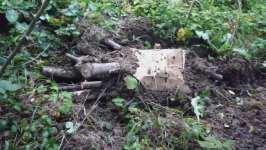 Otep dřeva se sadbou hlívy ústřičné zapuštěné v zemi, říjen 2008, Brno Soběšice