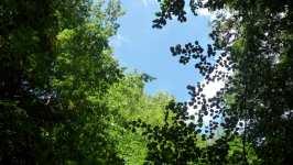 Nebe mezi korunami stromů, srpen 2008, Brno Soběšice