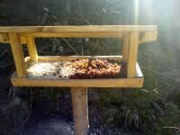 Krmítko feeder krmení ptáčků birds