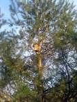 Budka na stromě visí