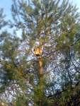 Budka na stromě visí a visí