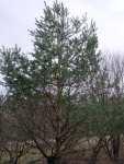 Domeček pro ptáky na stromě