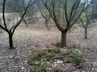 Část zahrady s ovocnými stromy v zimě