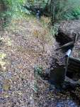 Bonsai: Vrba, Salix (Willow) u potoka