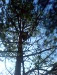 Dark house on the tree