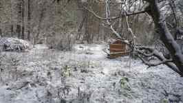 Zahrada po napadnutí prvního sněhu, listopad 2008, Brno Soběšice