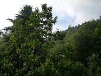 Zahrada jakoby v lese nebo v horách, květen 2009