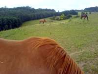 Ryzák fuksa hnědý kůň na ranči v Brně Soběšicích