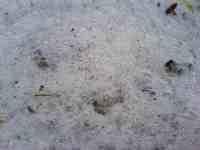Pěna hnojůvky z kopřiv