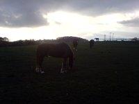 Koně večer v oboře nedaleko zahrady, Listopad 2007