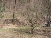 Jarní pohled na jabloň a vrbičky