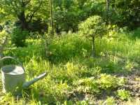 Konev bonsaje zákoutí zahrada