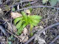 Mladé rostliny v únoru 2008