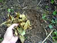 Mulč listí