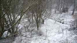 Napadl první sníh, listopad 2008, Brno Soběšice