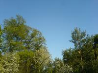 Nebe a stromy