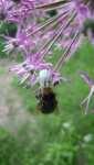 Bílý pavouk chytil čmeláka, konec dubna 2008