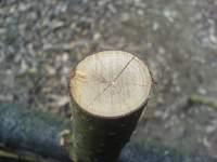 Pěkný detail prasklého průřezu dřeva na brance