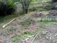 Pokácené stromy na zahradě dřevo padlý poražený kmen
