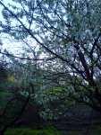 Ponuré jaro, moravský podvečer