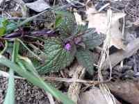 První jarní květ v únoru 2008