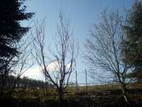 Ptáček na stromě, únor 2008