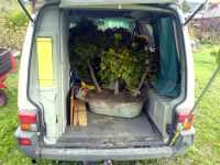 Bonsaje v autě, 2007