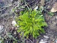 Mladý trs