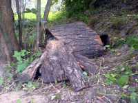 Úkryt pro brouky wild insects shelter z kůry pod větvemi
