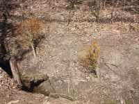 Vrby z Třeště u potoka