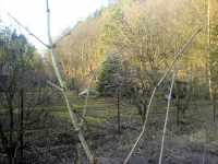 Zahrada v Soběšicích, Melatín u lesa