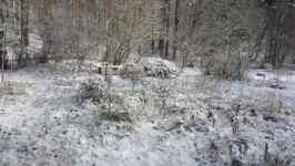 Zahrada pod sněhem, listopad 2008, Brno Soběšice