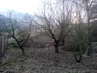 Zde bude přírodní louka pod stromy, plánování zahrady