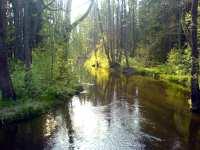 Řeka Lužnice nedaleko Rožmberka