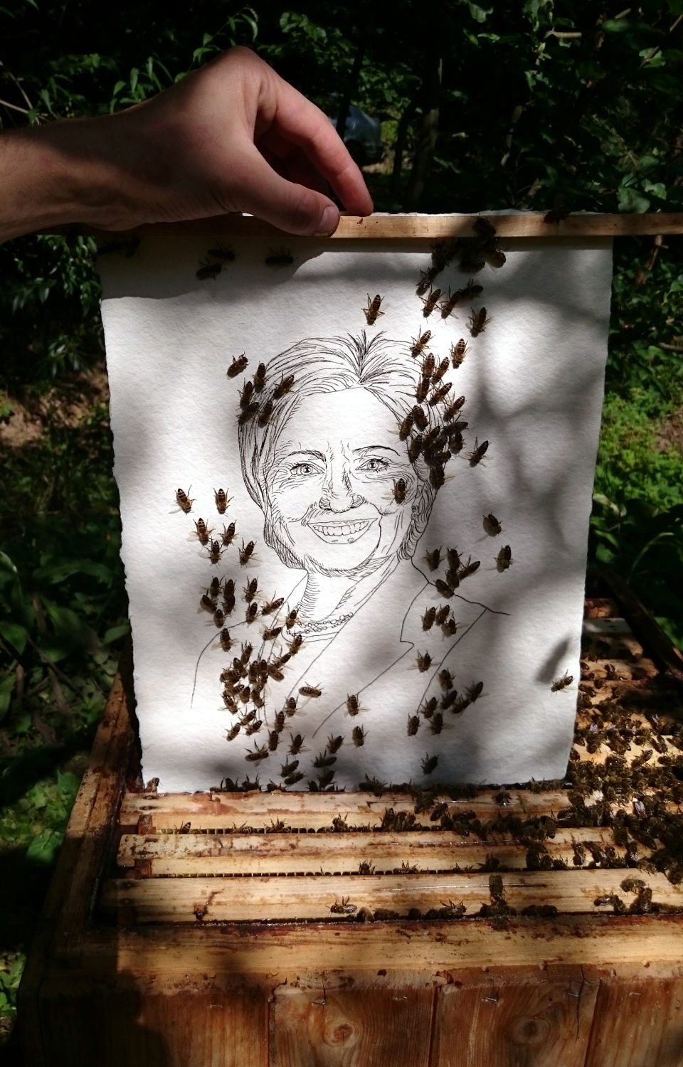 Hillary Clinton beeing inserted in the beehive