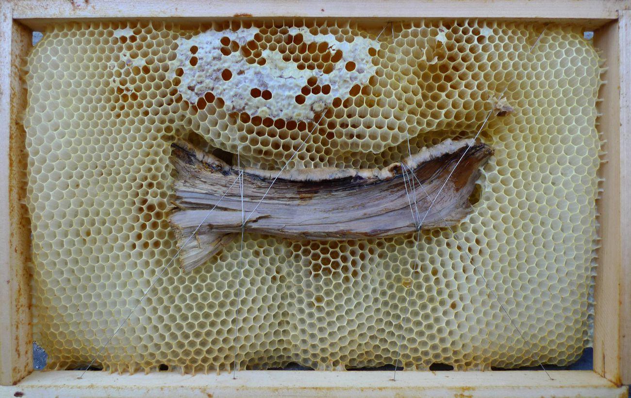 Jan Karpíšek: Ryba, kombinovaná technika, dřevo a včelí dílo z vosku s medem, 24x39 cm, 2011