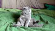 Sedící modrý Garfield jménem Nicholas, Hradec Králové 2008