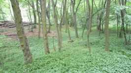 Dubový les v Morkůvkách, červen 2008