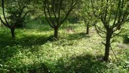 Karpíškova zahrada, červen 2008