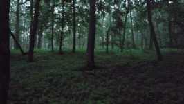 Les v Morkůvkách, červen 2008