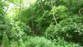 Prales s bezy, Morkůvky, červen 2008