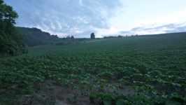 Pole v Morkůvkách, červen 2008